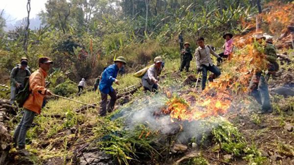 Lai Châu phá trên 52.000m2 cây thuốc phiện