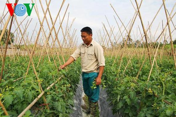 Lập nghiệp bằng cách trồng rau quả an toàn