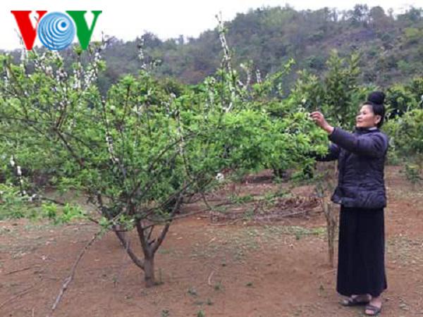 Người phụ nữ Thái tích cực làm trang trại