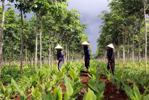 Đắc Lắc thiếu đất sản xuất vì vướng nhiều thủ tục