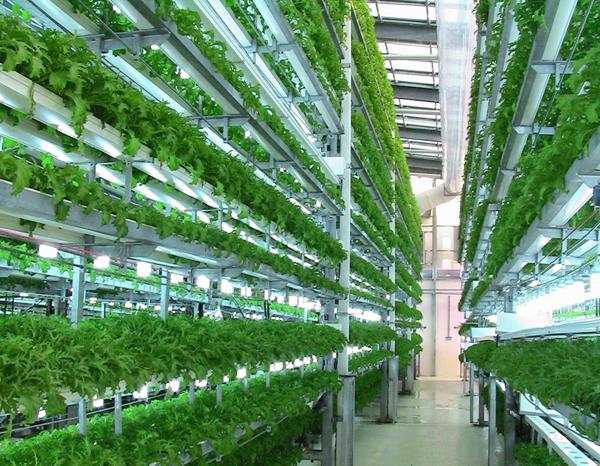 Phát triển mô hình nông nghiệp công nghệ cao ở Lâm Đồng