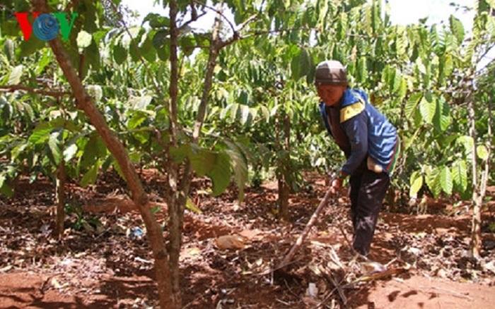 Quảng Ngãi hỗ trợ 15 triệu đồng cho hộ nghèo phát triển kinh tế
