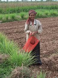 Thiếu đất sản xuất nhưng vẫn mang đất đi cầm cố